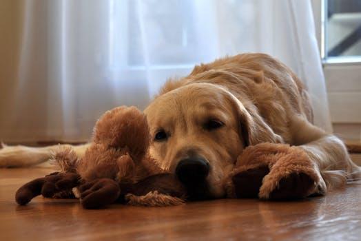 dog behaviorist