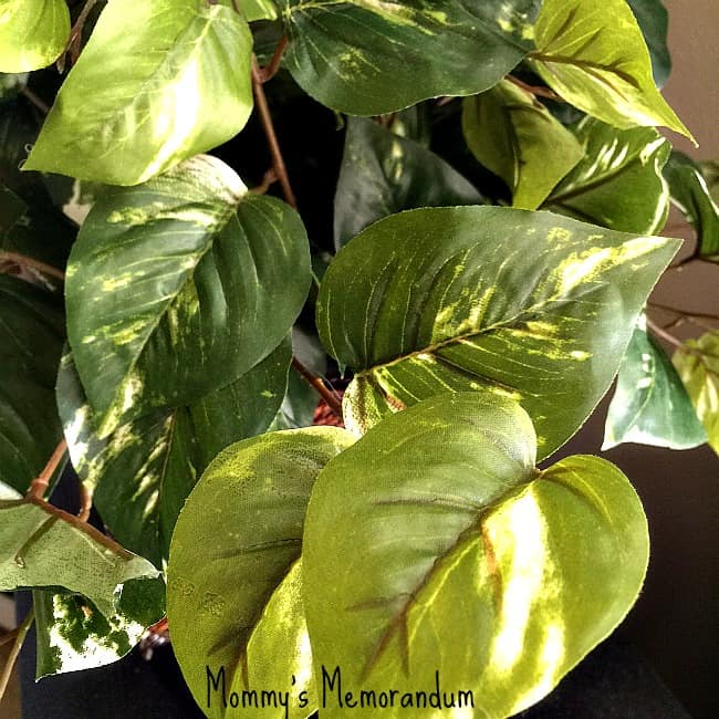 silkplantsdirect.com pothos