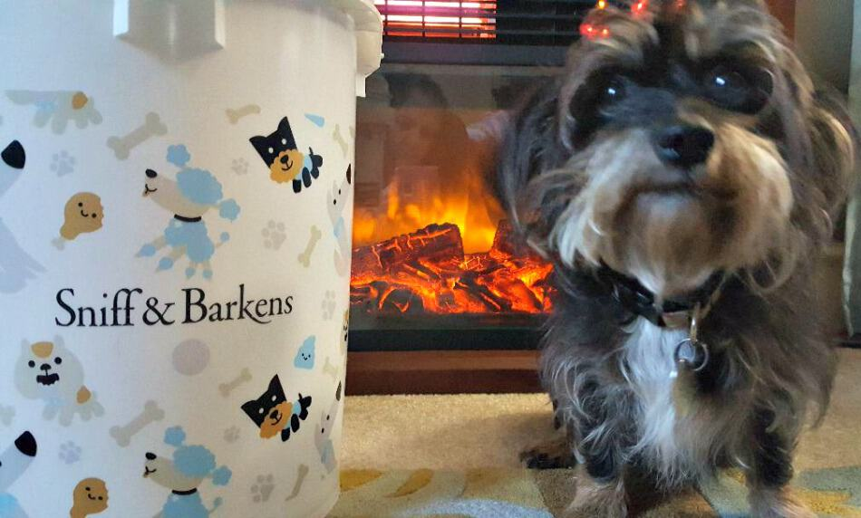 sniff and barkens holiday bucket with bailey mae