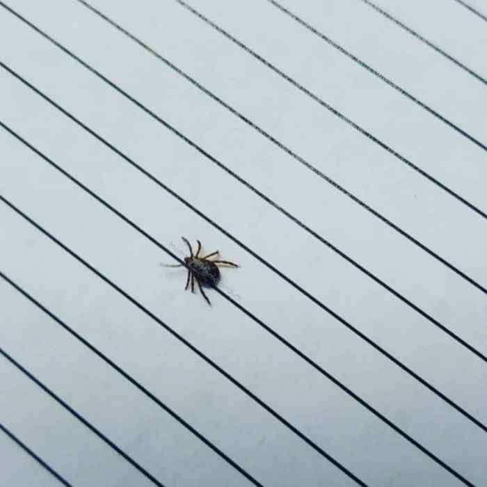 How to control ticks in your backyard