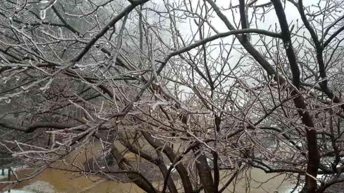 wintergreen ice tree