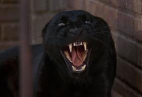 Cat_People(1982)_29