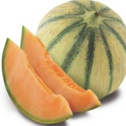 French Charentais Jaune Melon