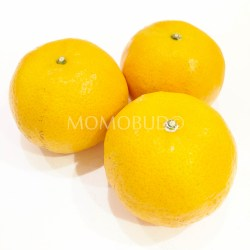 Taiwan Honey Murcott Mandarin Orange