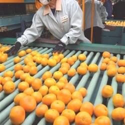 Karatsu Onshitsu Mikan Farm