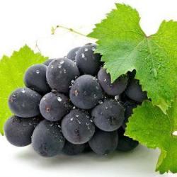 Japanese Kyoho Seedless Grape