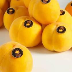 Calanda Yellow Peaches