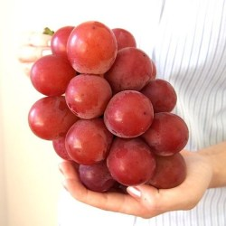 japanese-ruby-roman-grape-fruit