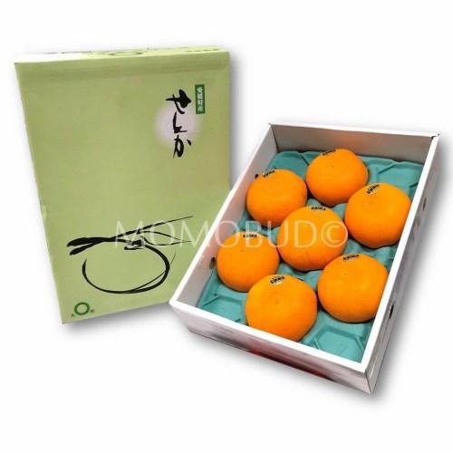 Japanese Setoka Mandarin Orange Gift Box 2