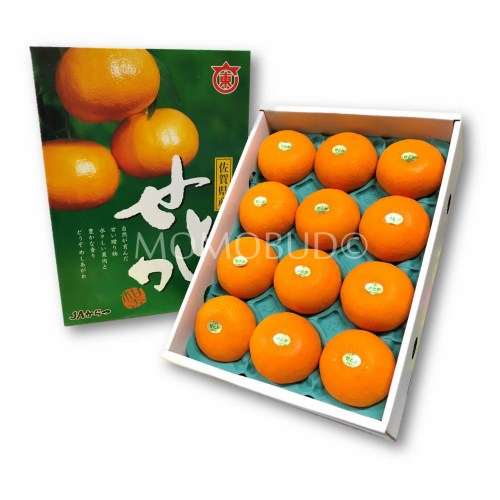 Japanese Setoka Mandarin Orange Gift Box