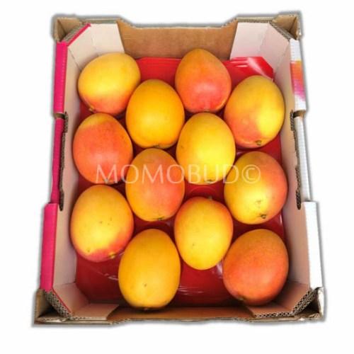 Calypso Mango Box