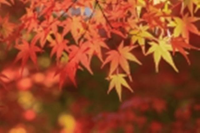 autumn2b