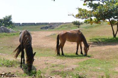 ゴールの砦内で(馬)