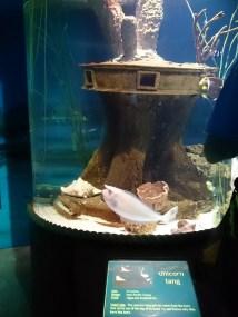 オレゴンコースト水族館-12-28-21