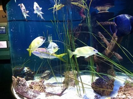 オレゴンコースト水族館-12-28-51