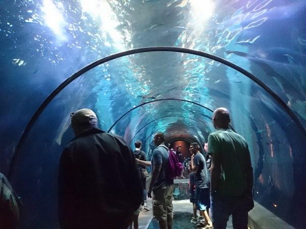 オレゴンコースト水族館-13-00-31