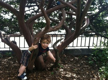 Tree climbing in the park.