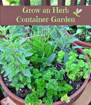 How To Grow An Herb Container Garden