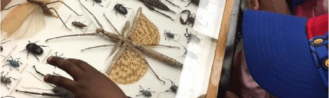 Insectival 2