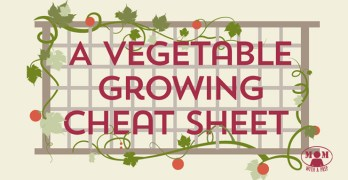 A Vegetable Planting Cheat Sheet Infographic