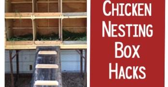 15+ Chicken Nesting Box Hacks