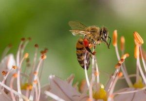 Greenwashing - mettre des ruches ne rend pas écologique