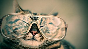 Presbytie - chat a lunettes - mon alter eco