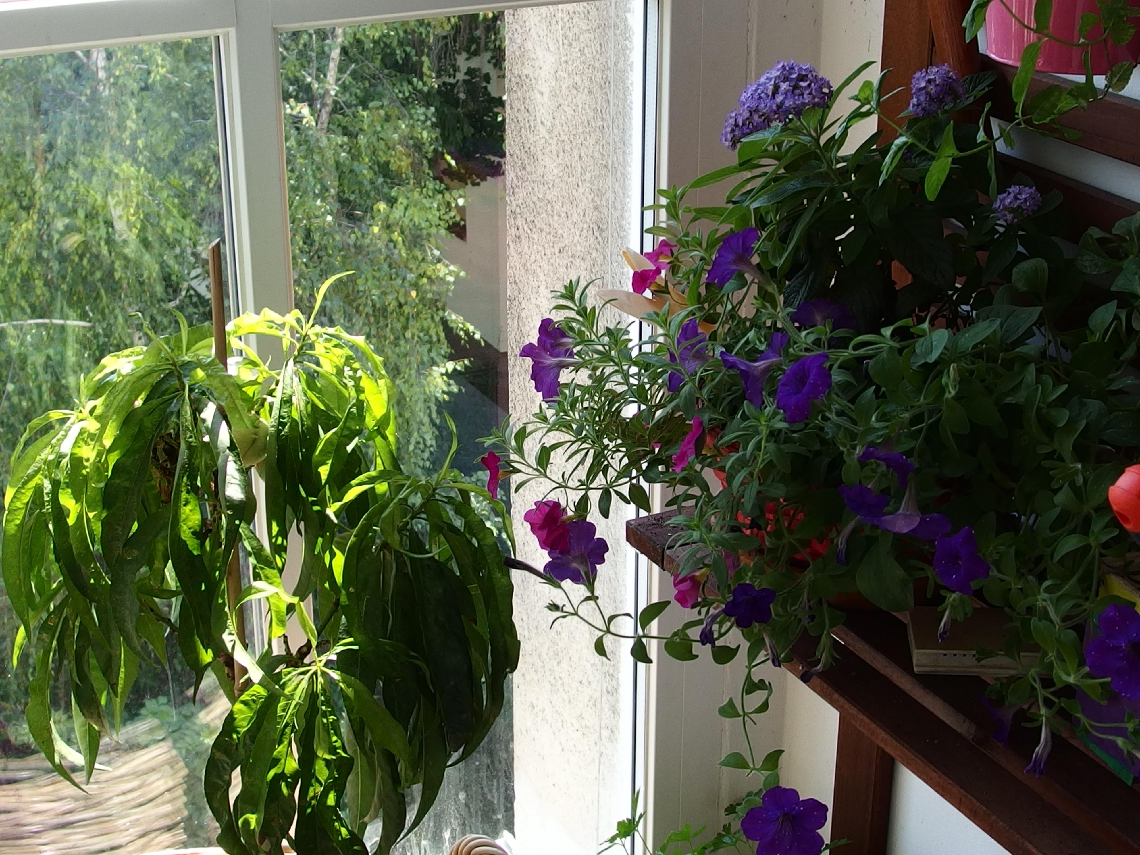 5 critères à prendre en compte pour choisir ses plantes