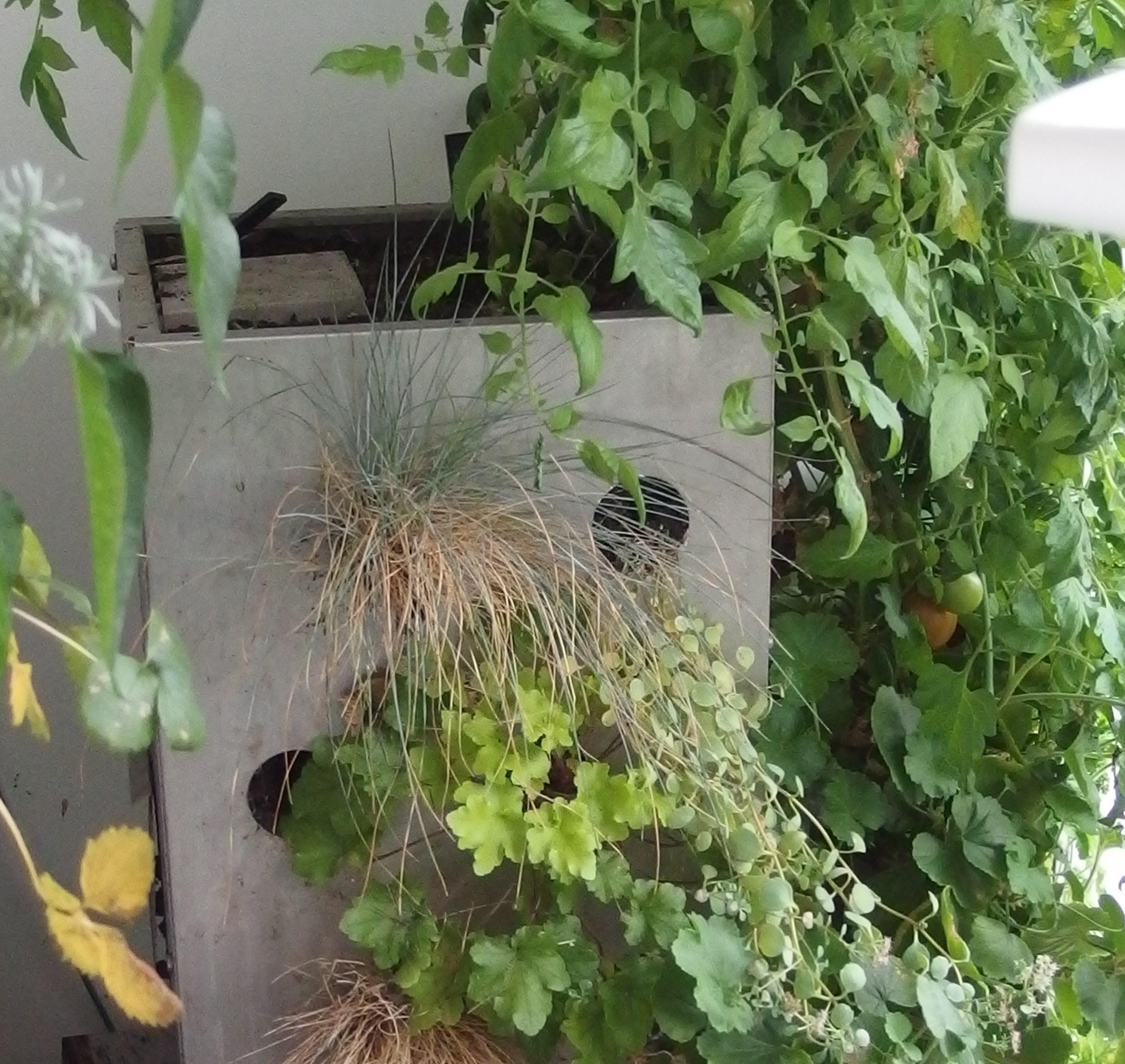 Défi balcon-jardin en octobre