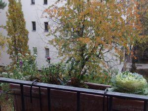 En novembre, le balcon-jardin s'endort