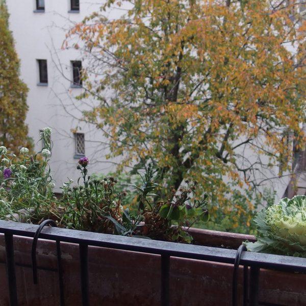 Défi balcon-jardin en novembre