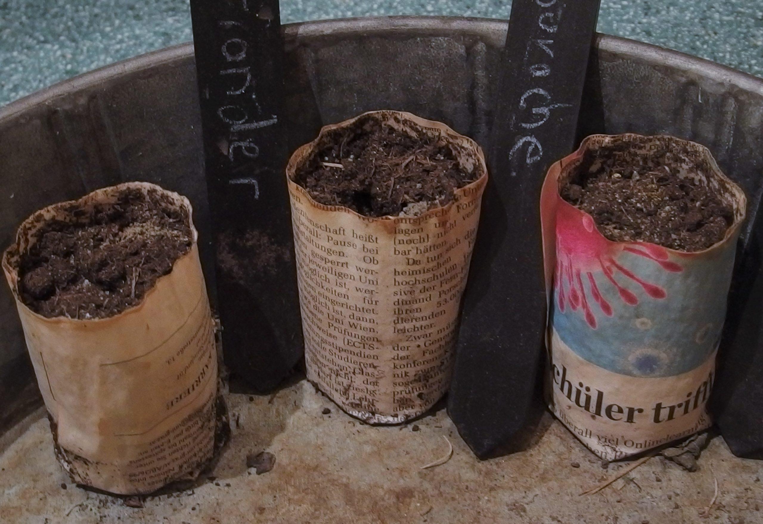 Faire des semis : le matériel