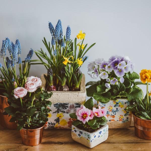 6 fleurs de printemps pour le balcon