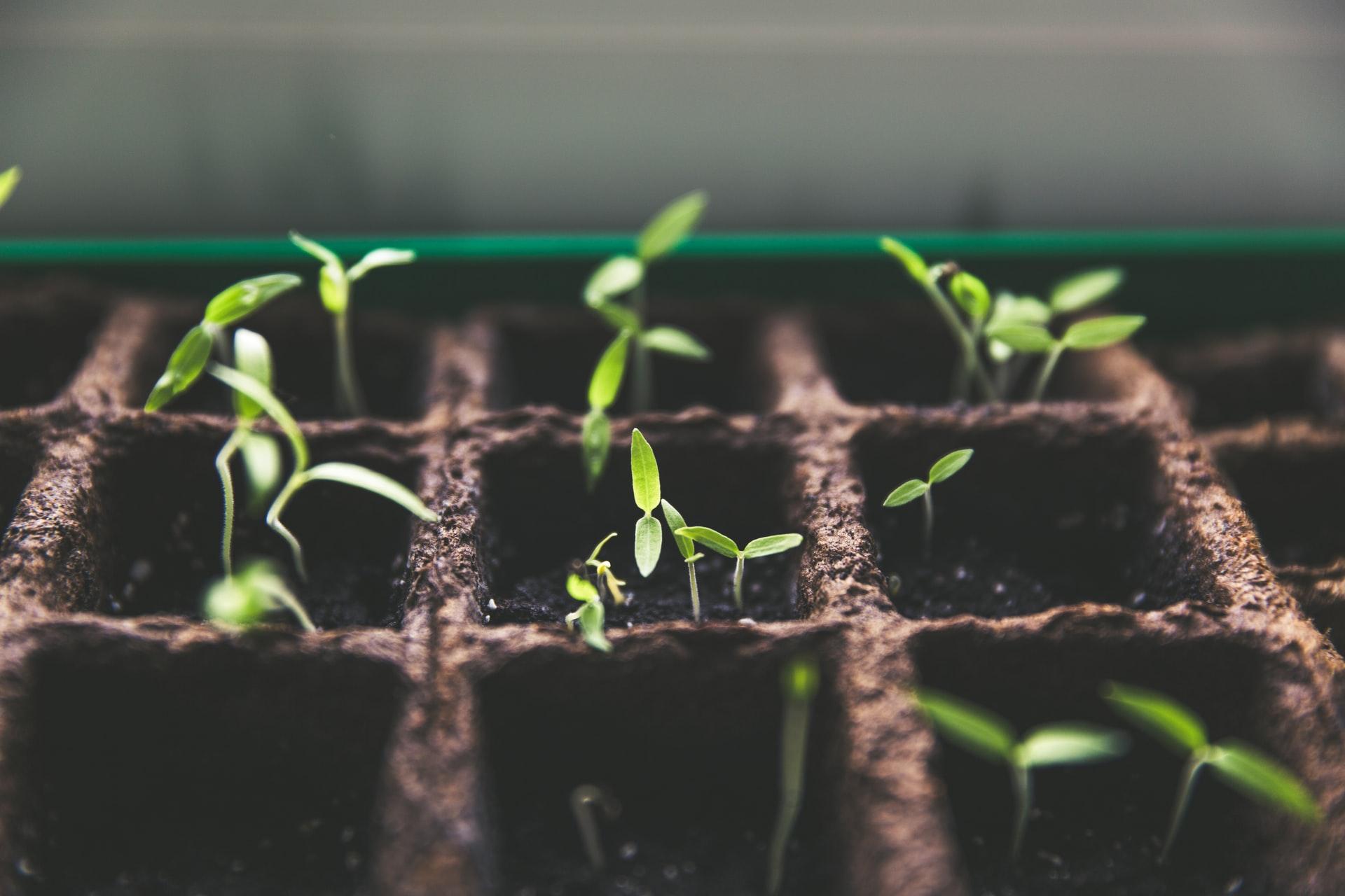 Faire des semis : l'essentiel – Nouveau podcast
