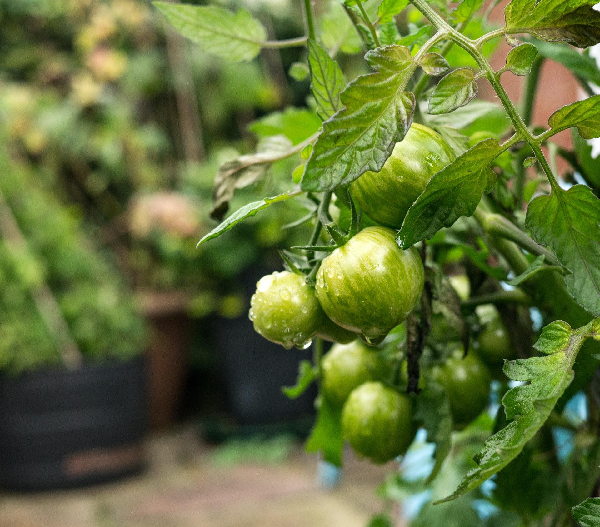 7 plantes pour commencer un potager sur votre balcon