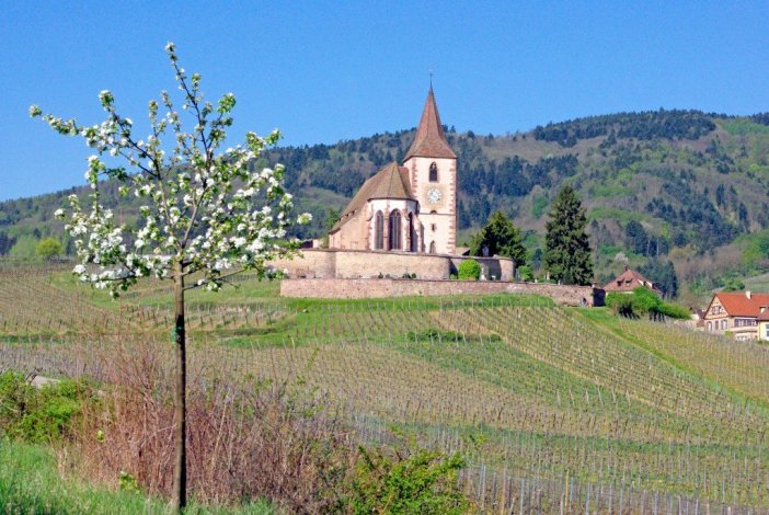 Photos de printemps en Alsace : Hunawihr © French Moments
