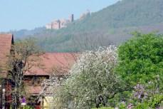 Bergheim Alsace