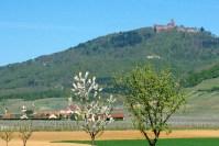 Haut-Kœnigsbourg Alsace