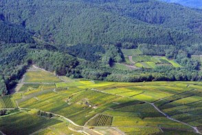 Vignoble d'Eguisheim, Alsace © French Moments