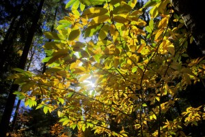 Forêt du Semnoz en automne © French Moments