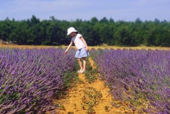Sault-de-Vaucluse © French Moments