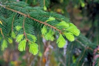 Nuances de verts, forêt de Illfurth © French Moments