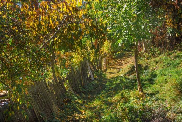 Un vieux chemin menant aux champs à Granier © French Moments