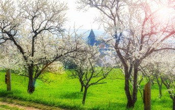 Photos de printemps en Lorraine - Lucey, Toulois © French Moments