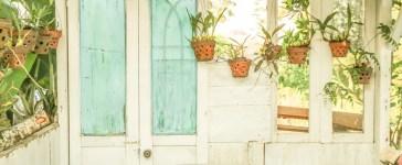 plantes à feuilles vertes en pot