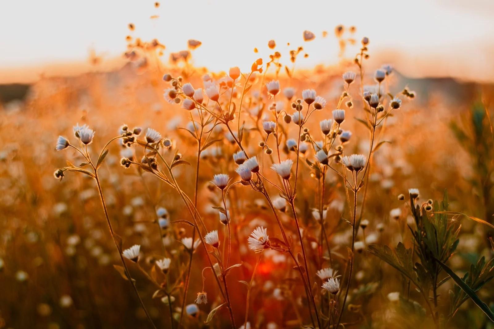 fleurs pendant la journée