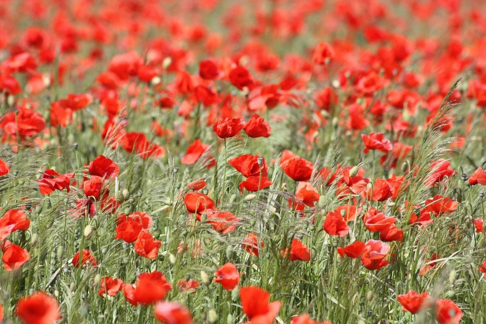 Inspiration pour mon jardin rouge