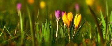 Que faire au jardin en Février ?