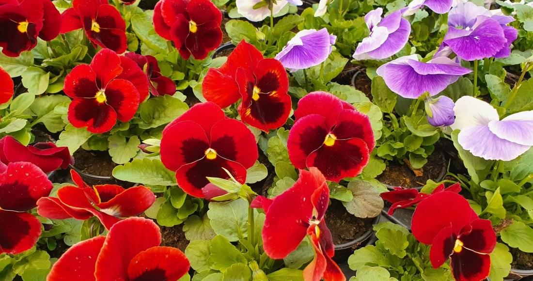 Fleurs du jardin en mars