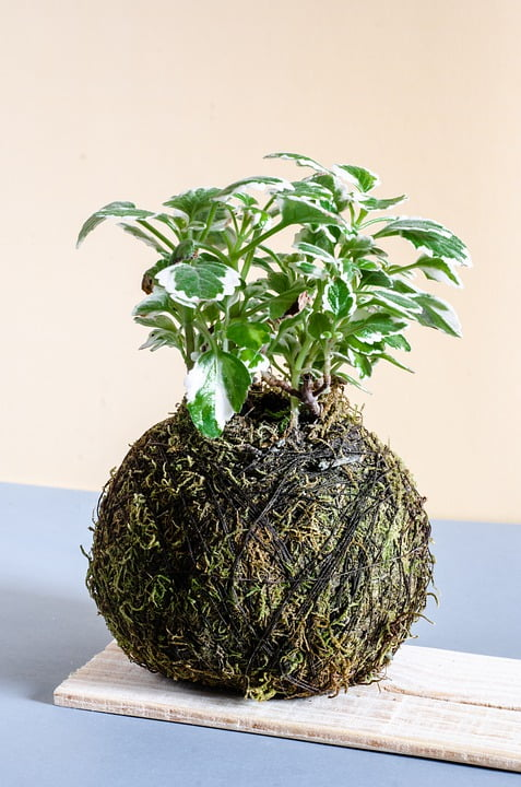 kokedama comment le faire